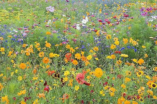 Abc paysages abc paysages est une agence de paysage for Abc espace vert